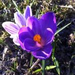 Våronna er i gang